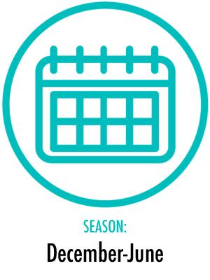 Season December-June