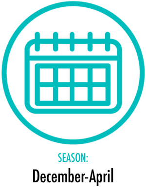 Season December - April