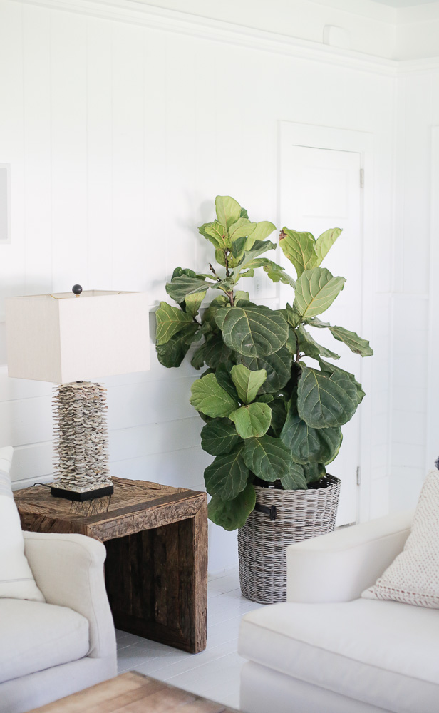 lowcountry home design; all white interior with plants