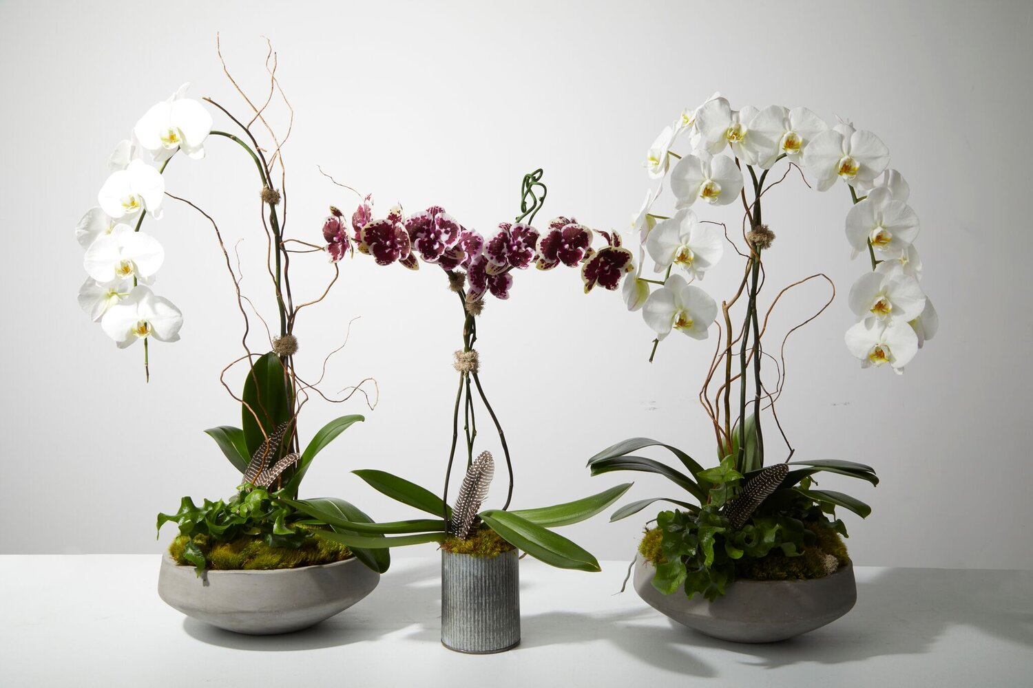OrchidsLight: Likes light but not direct sunlight.Water: Every 2 weeks (2-3 shot glasses worth of water). -