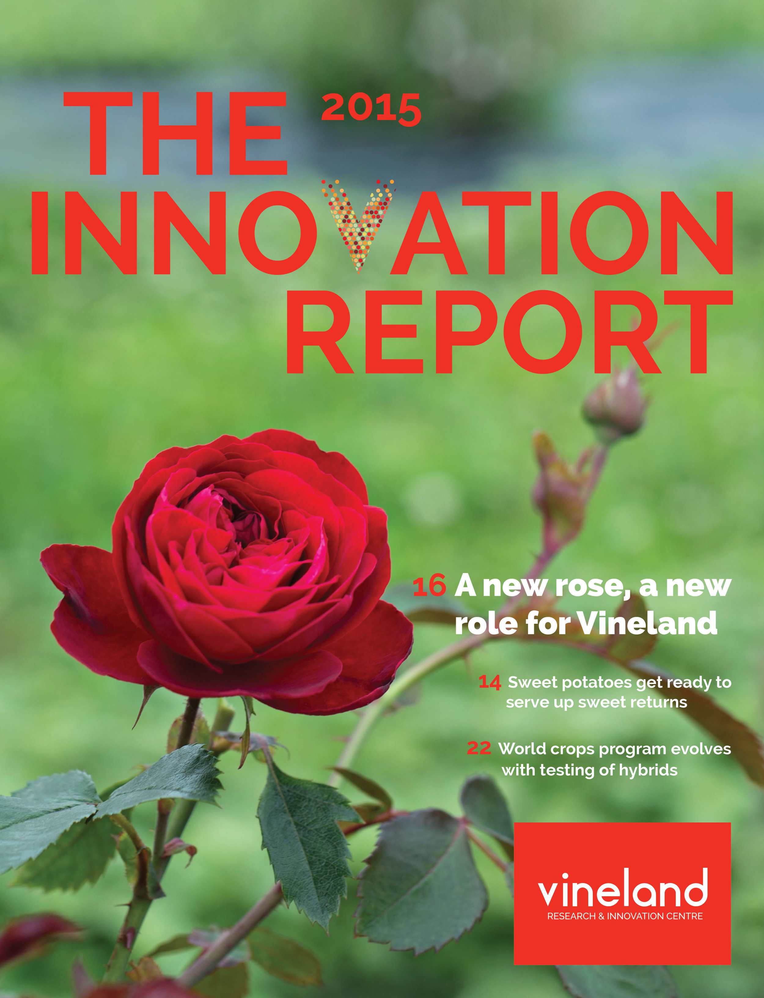 Marta-Hewson-Advertising-Roses-Innovation-Report-Vineland-Research.jpg