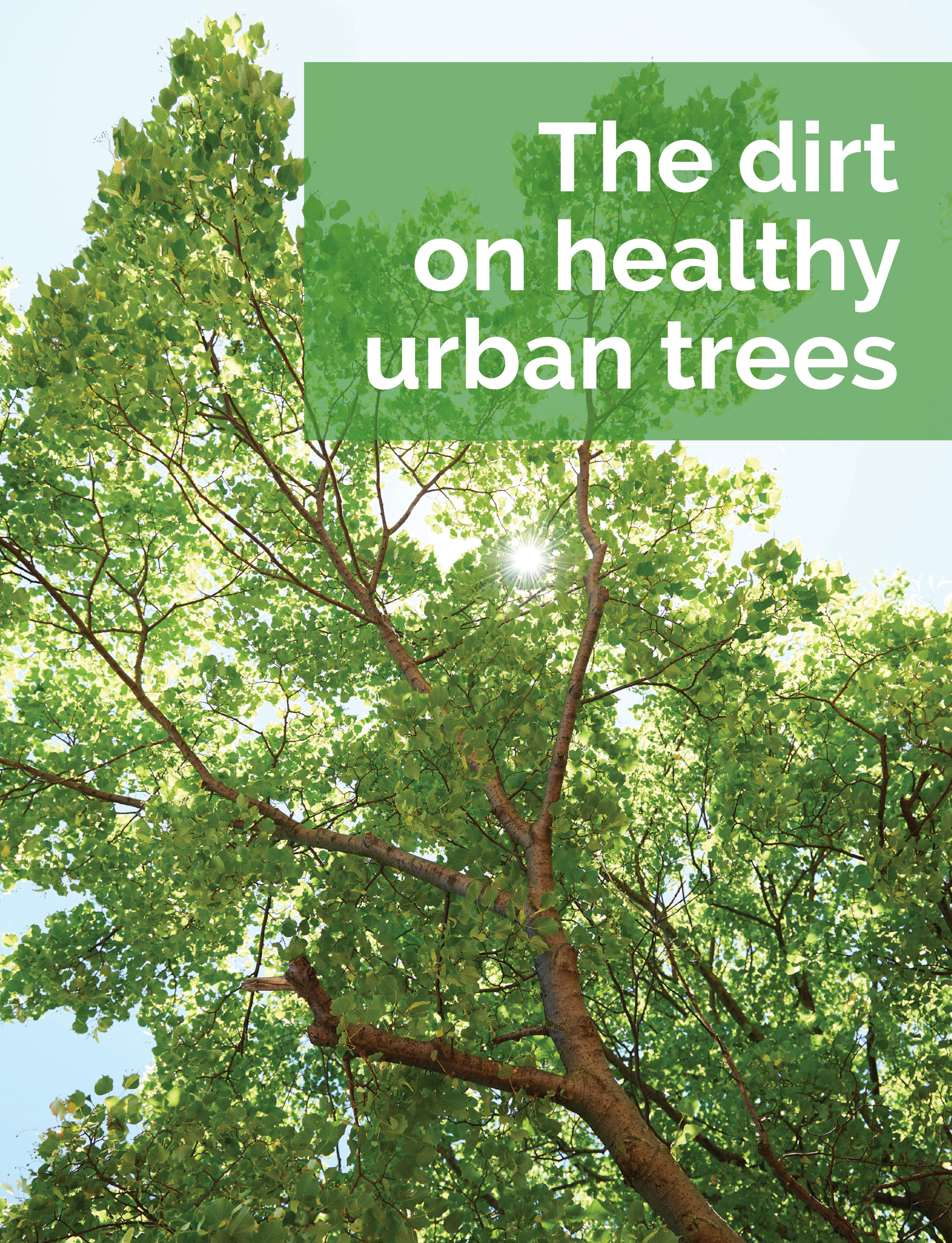 Marta-Hewson-Advertising-urban-tree-planning-Innovation-Report-Vinland-Research.jpg