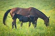 Well-turned-out-bay-horse.jpg