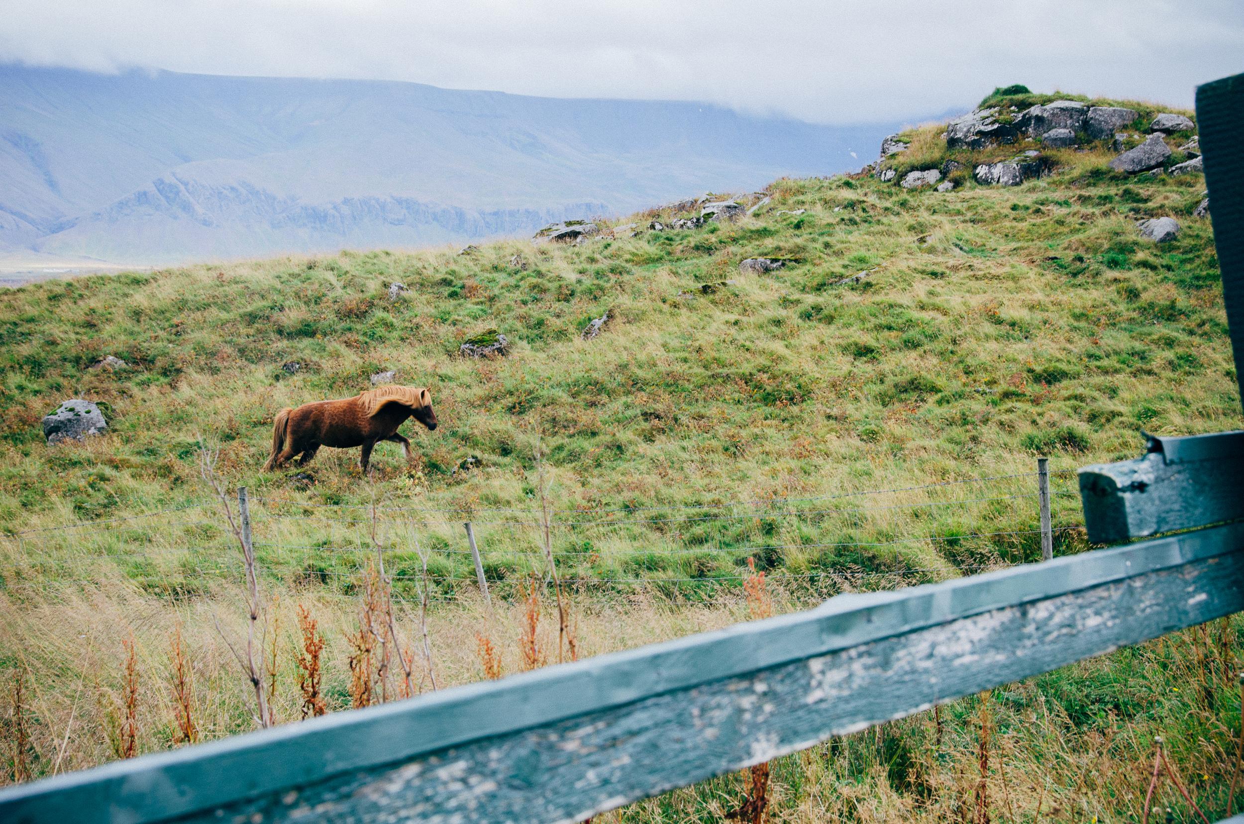 Megan Fuss Photography Iceland 2015 00004.jpg