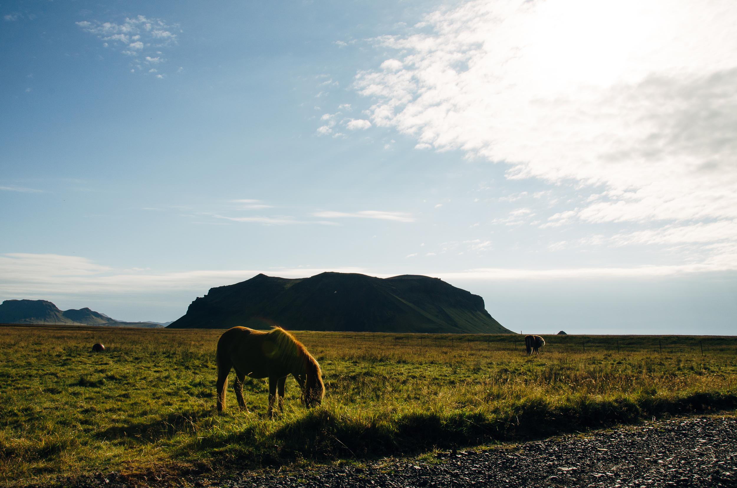 Megan Fuss Photography Iceland 2015 00035.jpg