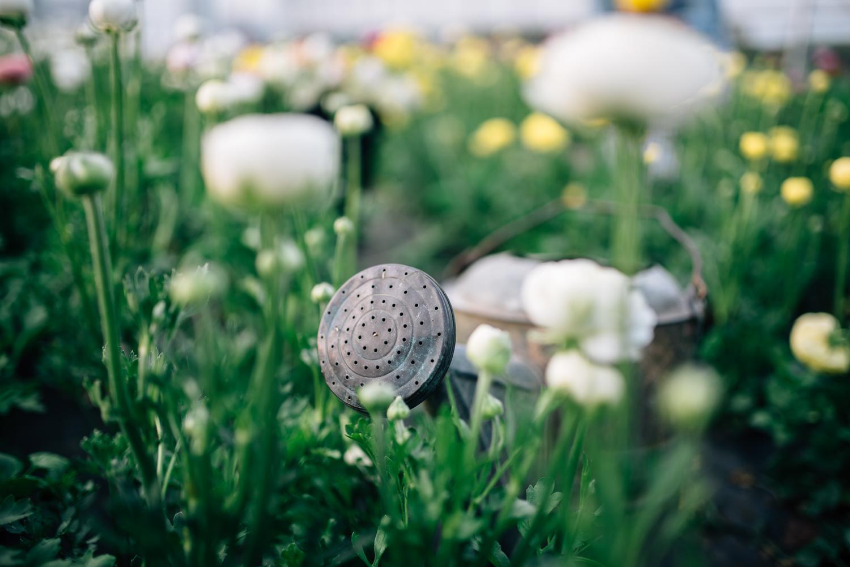 2016-05-12 Rooted Flowers 00292.jpg