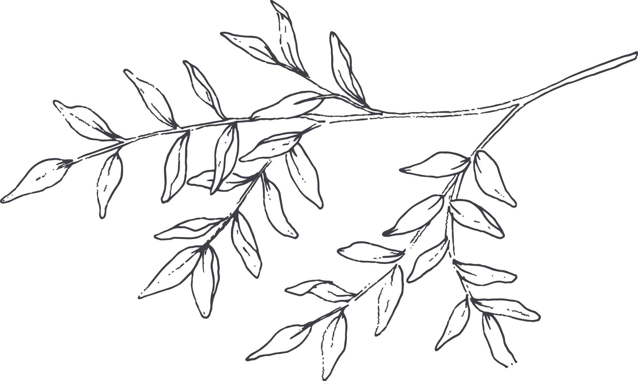 Branch+and+Breton_Illustration+-Branch.jpg