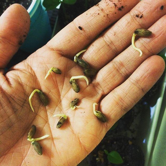 #lemongrove #newbeginnings #life