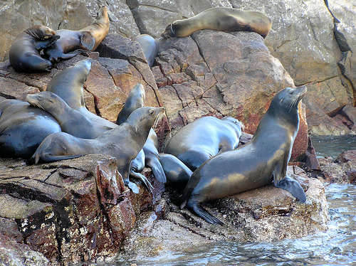 Discover Sea Lions on the beaches in Cabo - NAS ADVENTURES.jpg