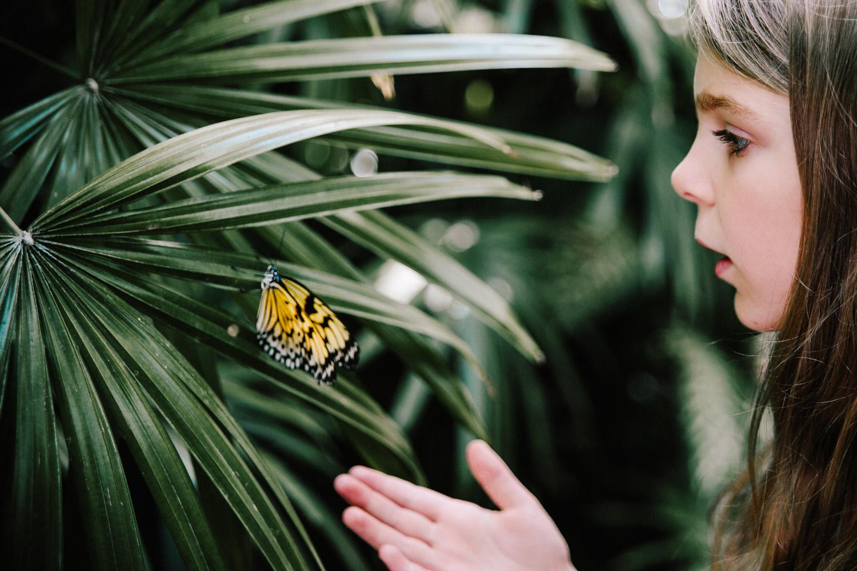 personal_butterfly (3 of 1).jpg