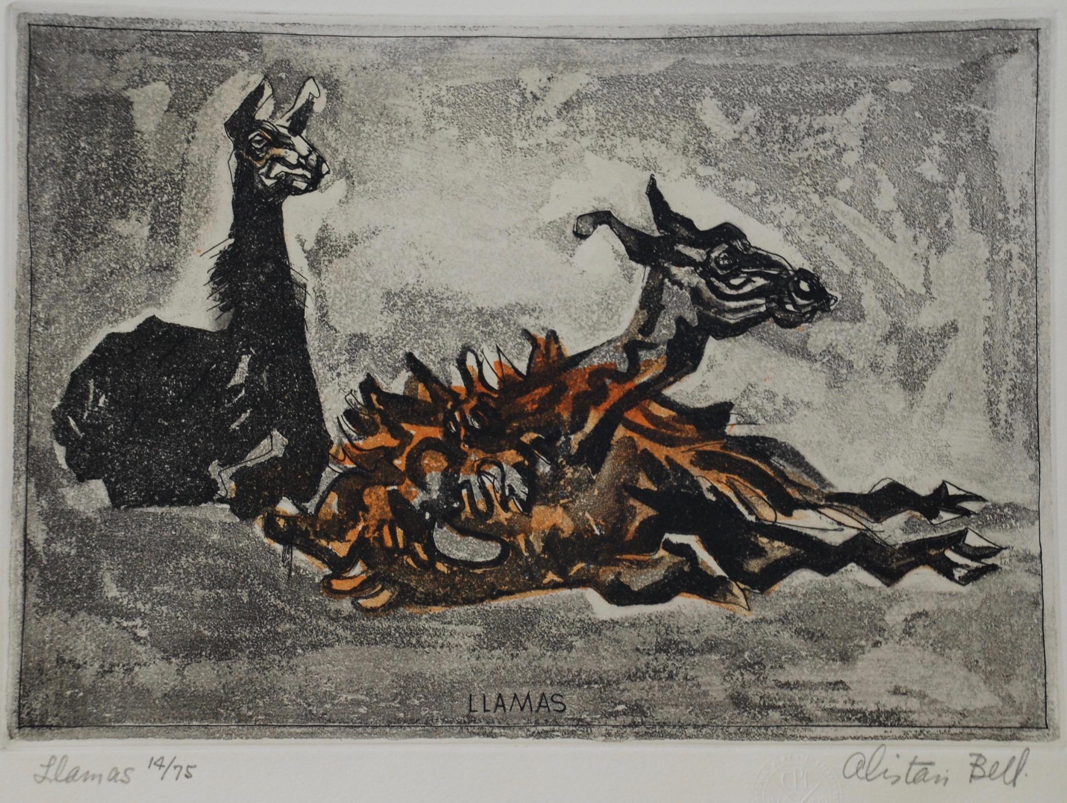 Alastair Macready Bell, Llamas