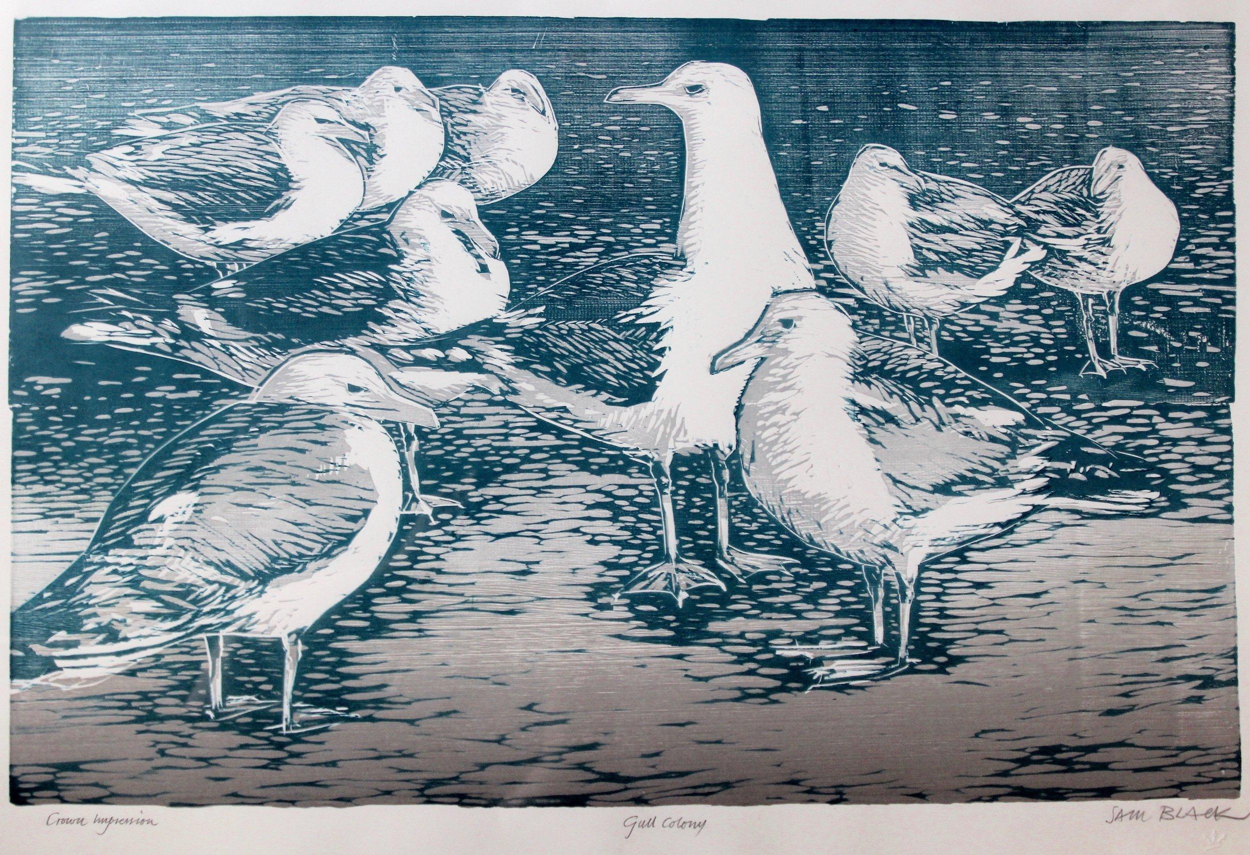 Sam Black, Gull Colony