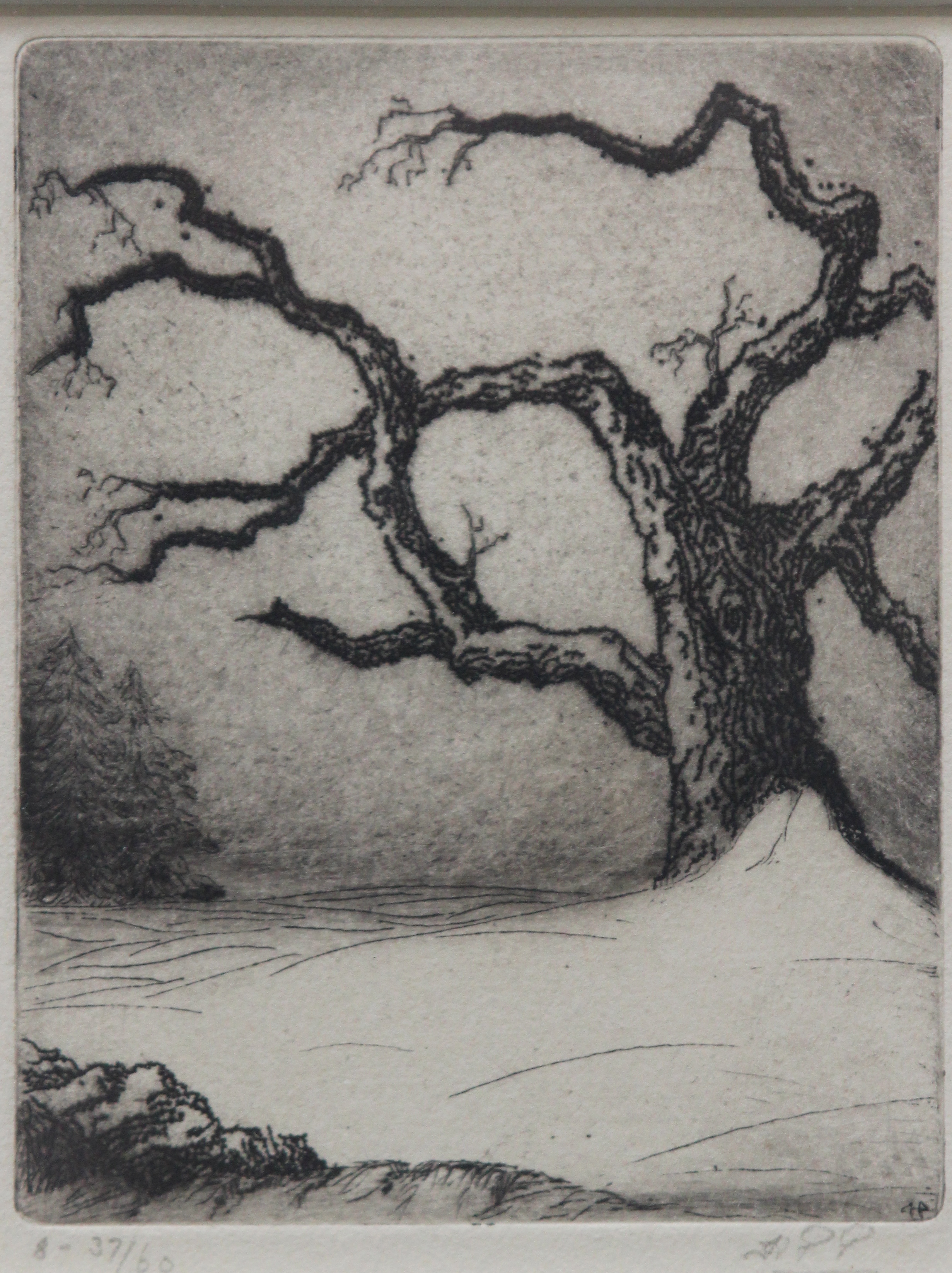 H.P. Porter, Untitled (Tree in Winter)