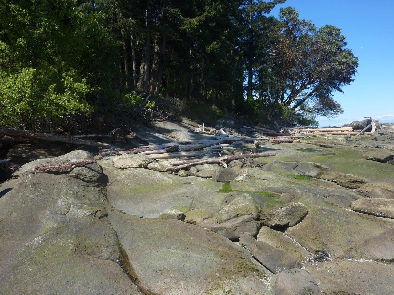NW beach shore.jpg