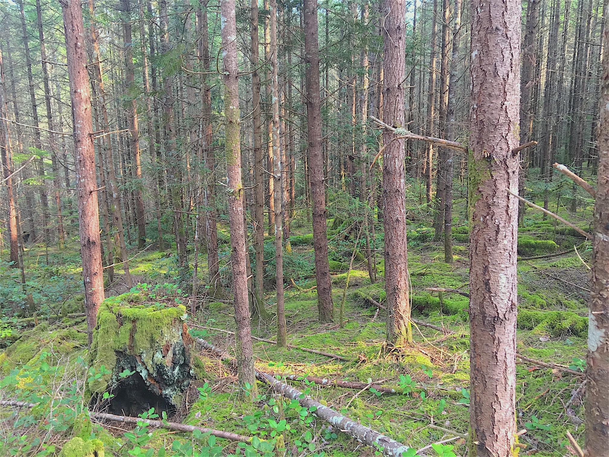 Trees and Stump.jpg