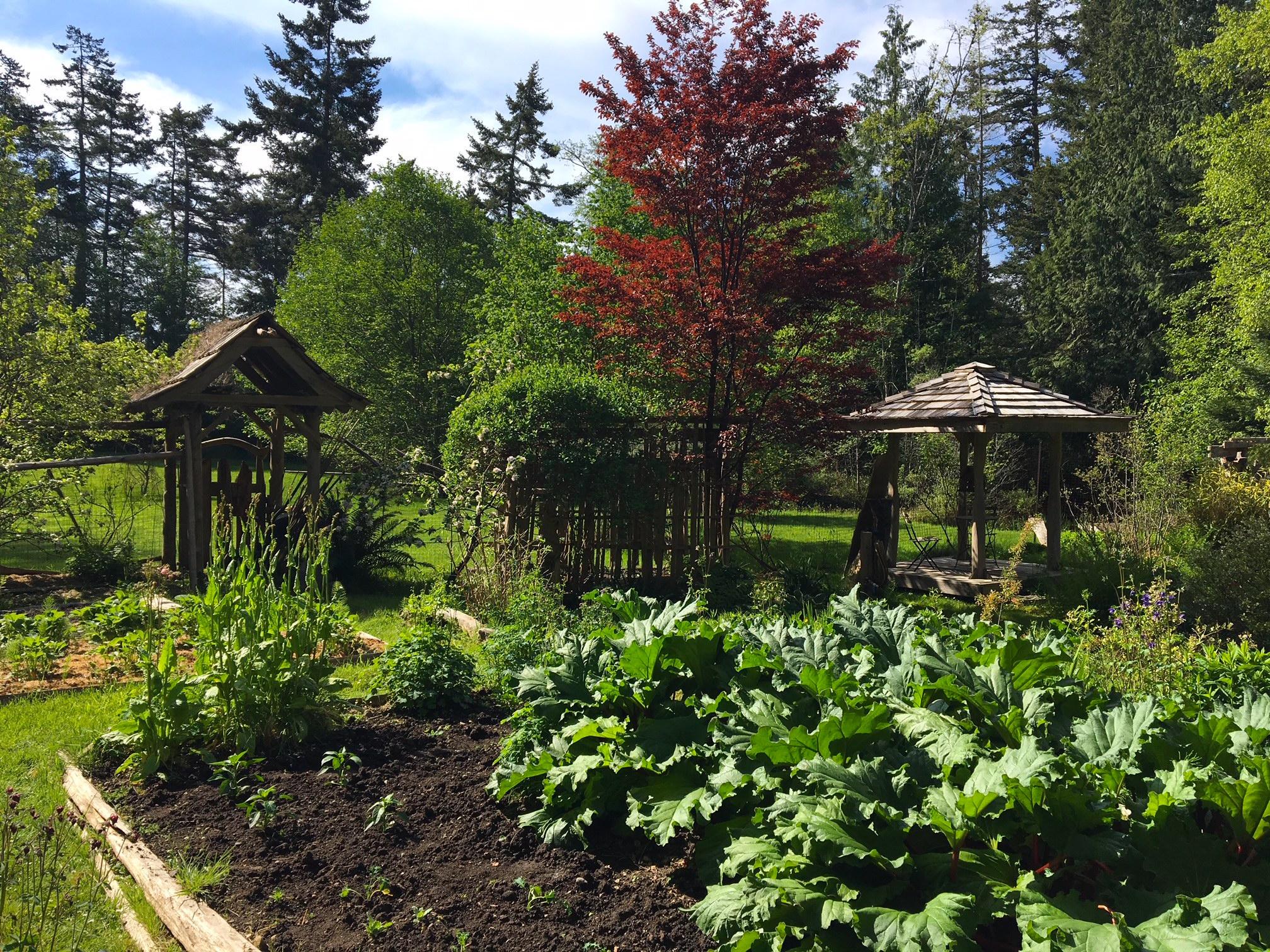3. Veggie garden.JPG
