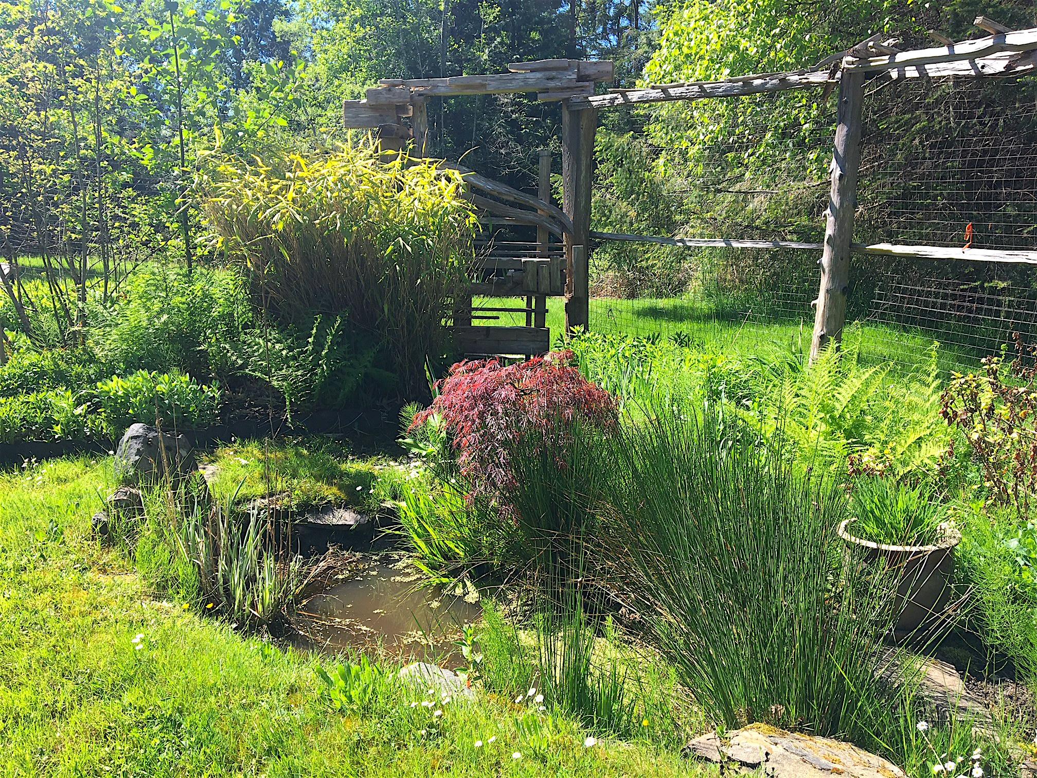 Small pond.JPG