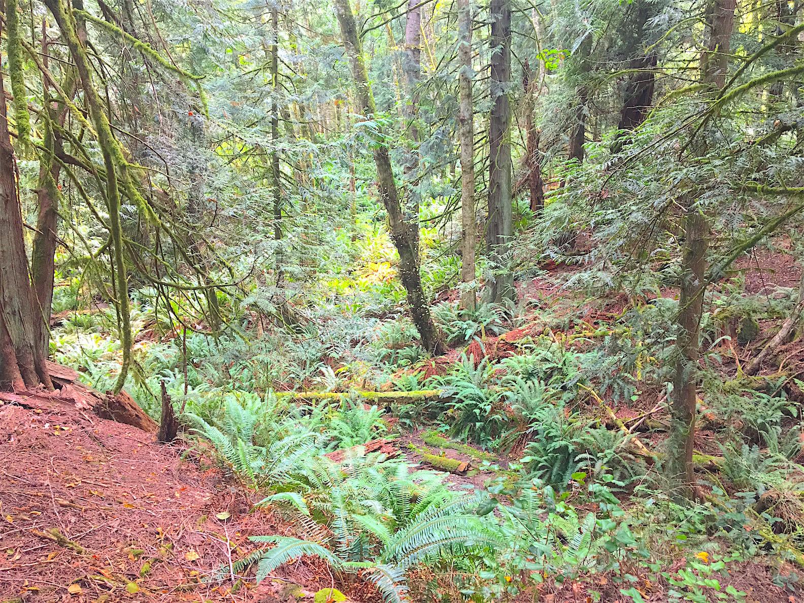 Forest 3.jpg