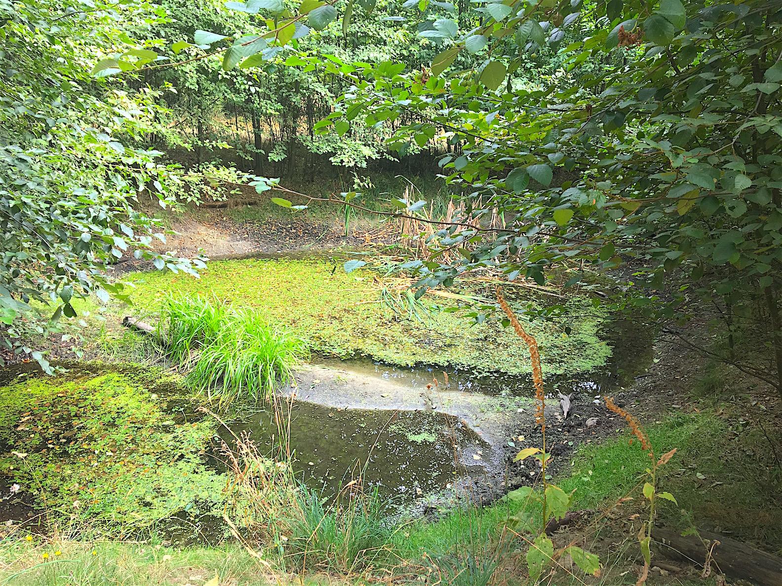 Forest pond.jpg