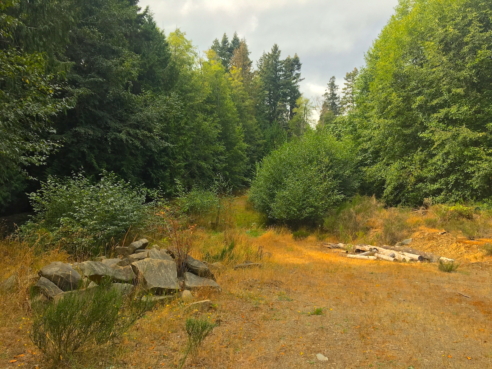 Logging road.jpg