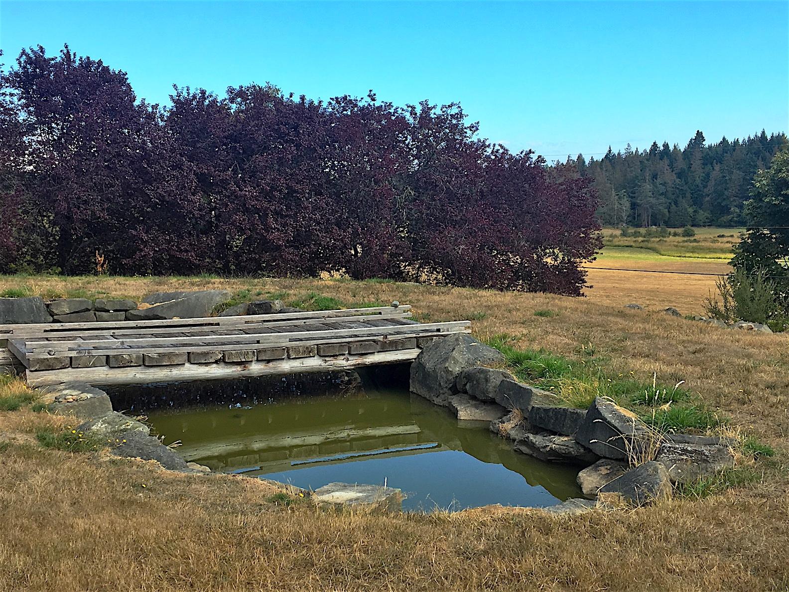 Pond & Bridge.jpg