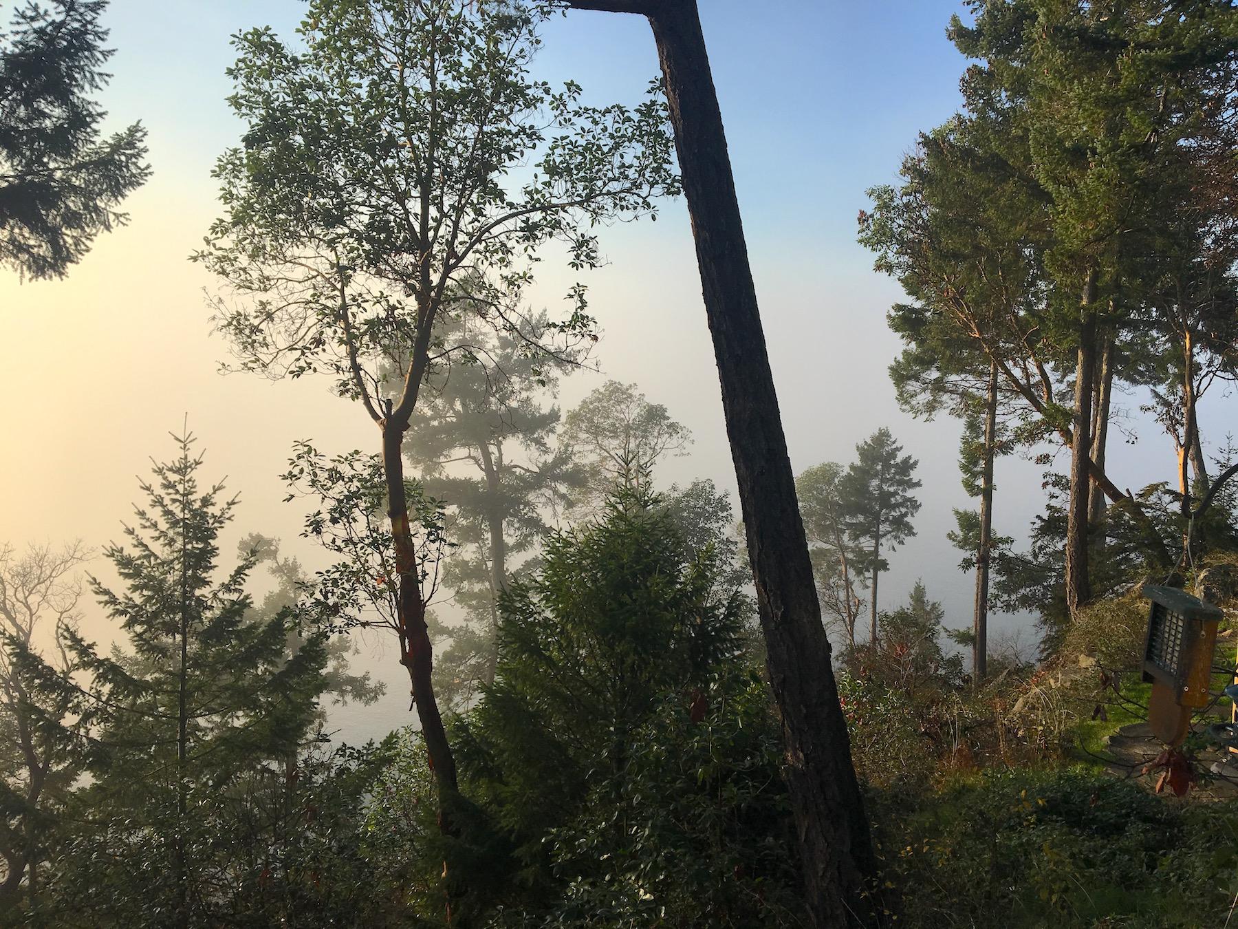 Foggy deck view