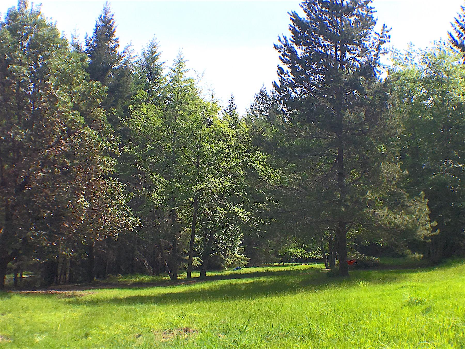 Meadow 2.jpg