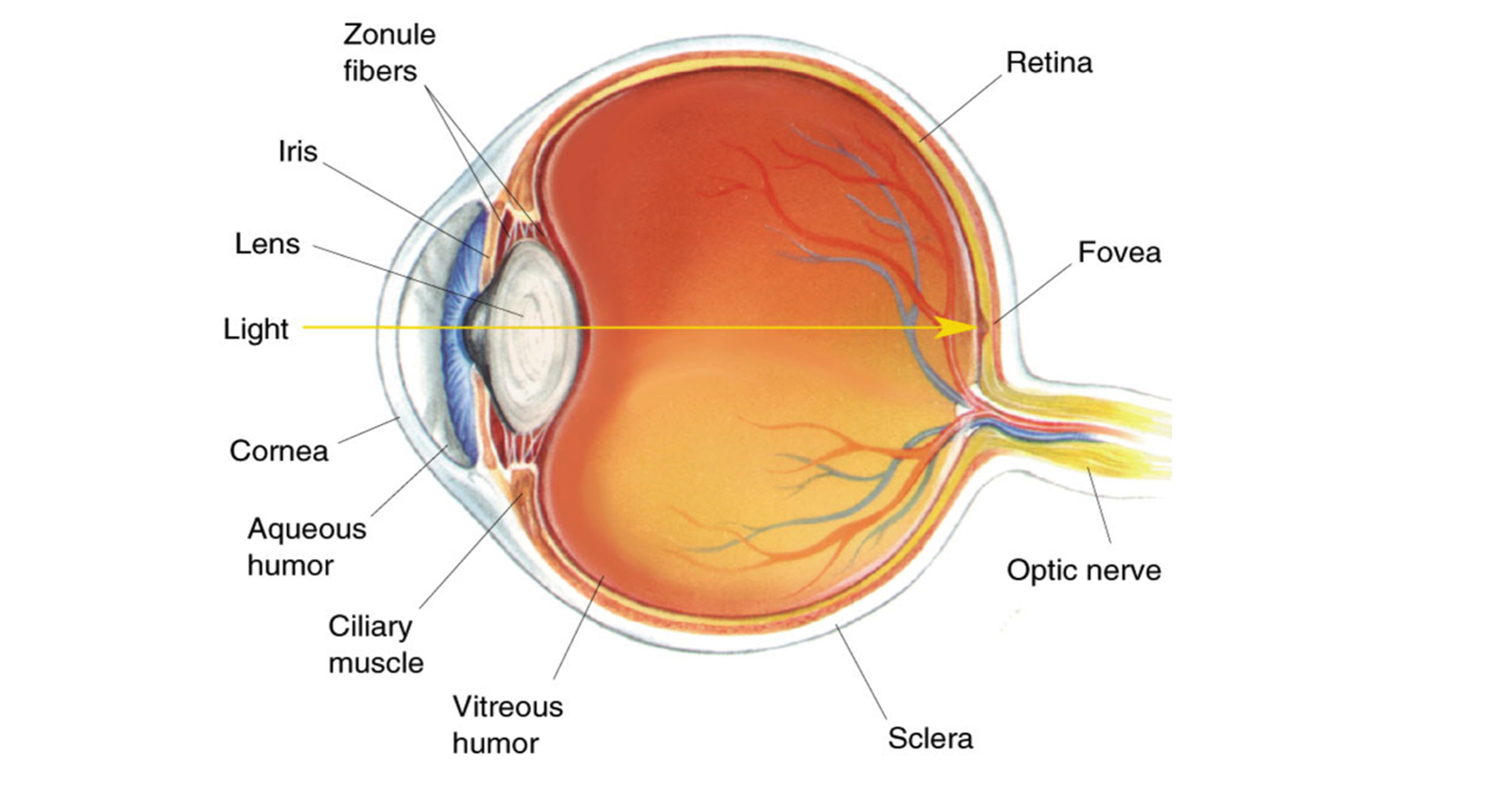 Cataract formation is a natural process that usually comes with age. The lens of the eye becomes progressively cloudy, blocking light from reaching the back of the eye.