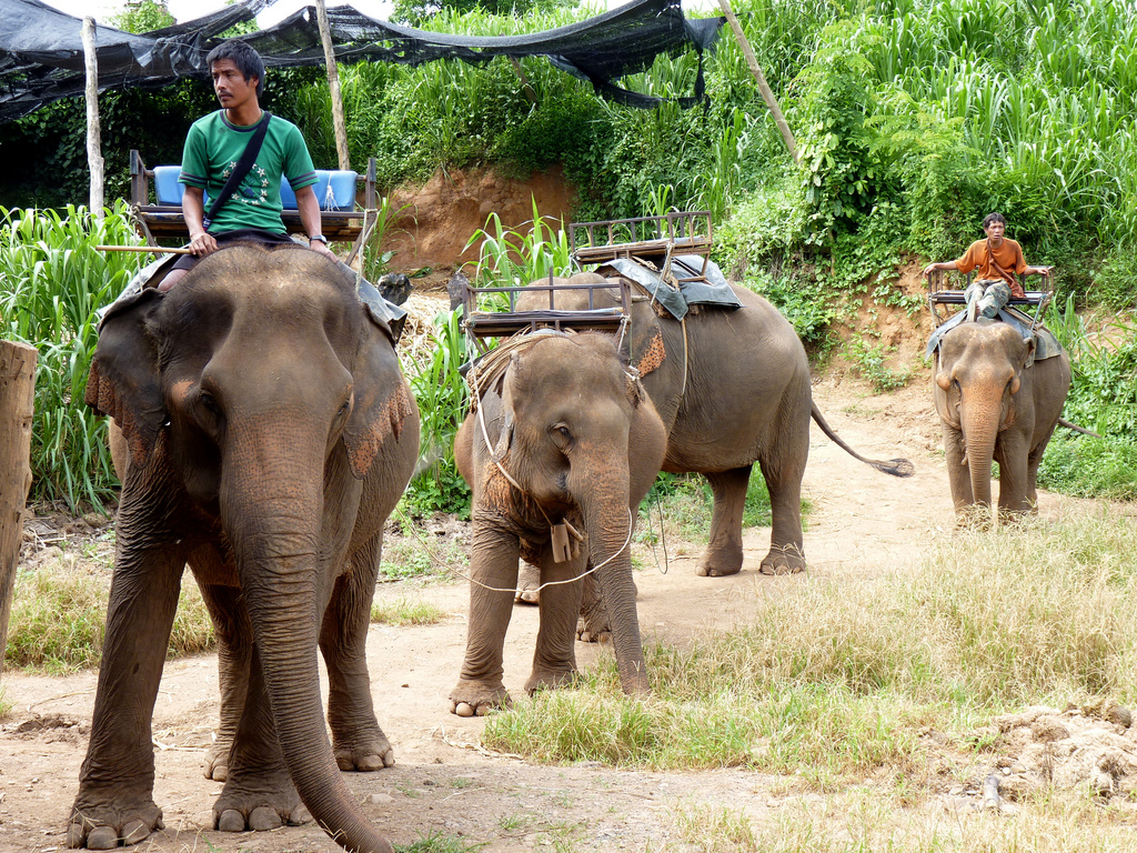 You could try a spot of elephant trekking. Image credit:    Bernard Oh   /Flickr