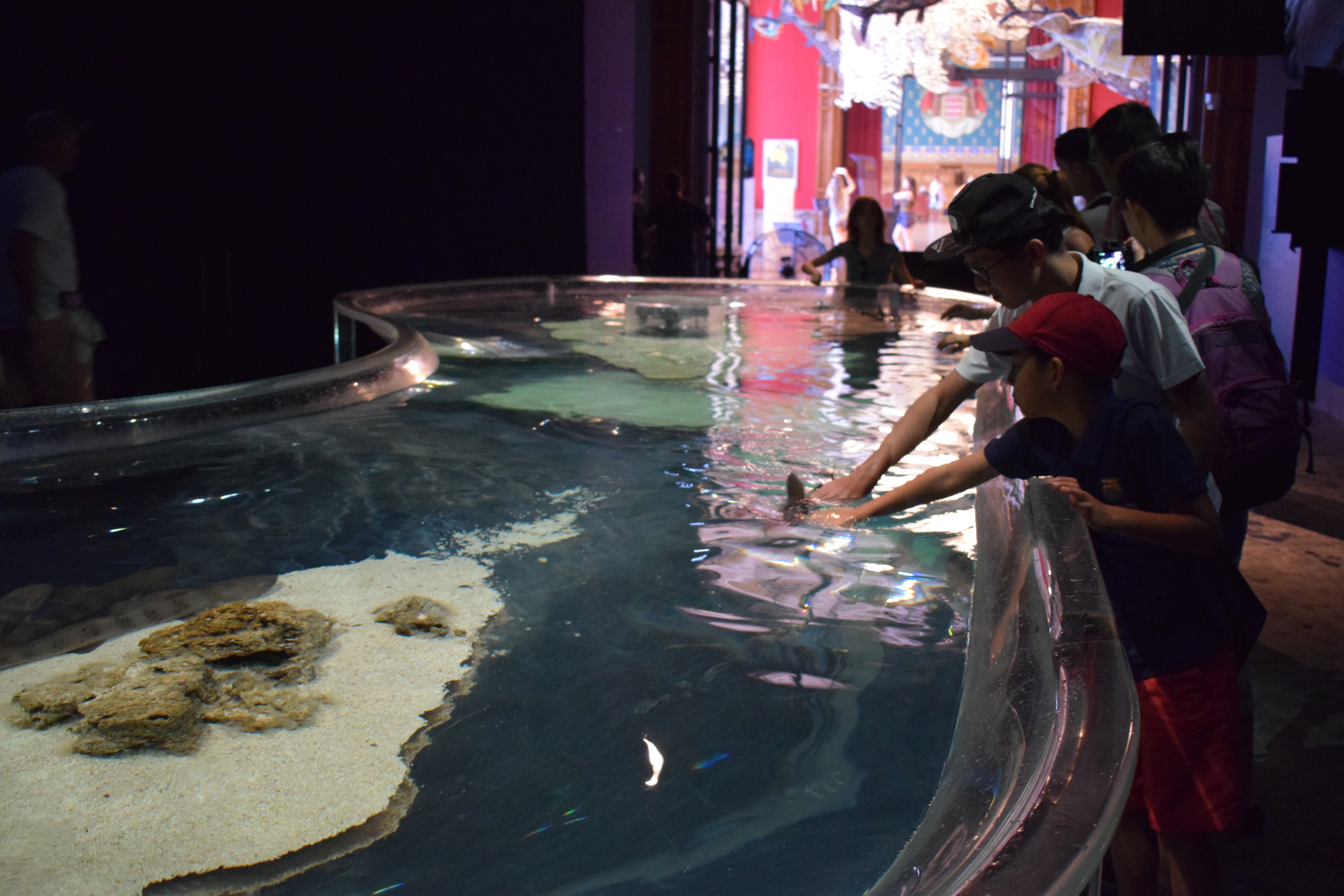 A father and son stroke a shark at Monaco's Oceanographic Museum.