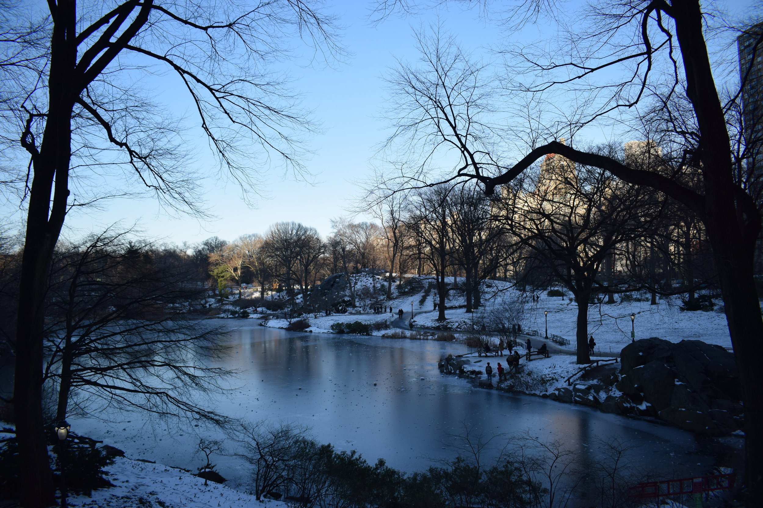 It was a cold day in Central Park, but it looked as stunning as ever.