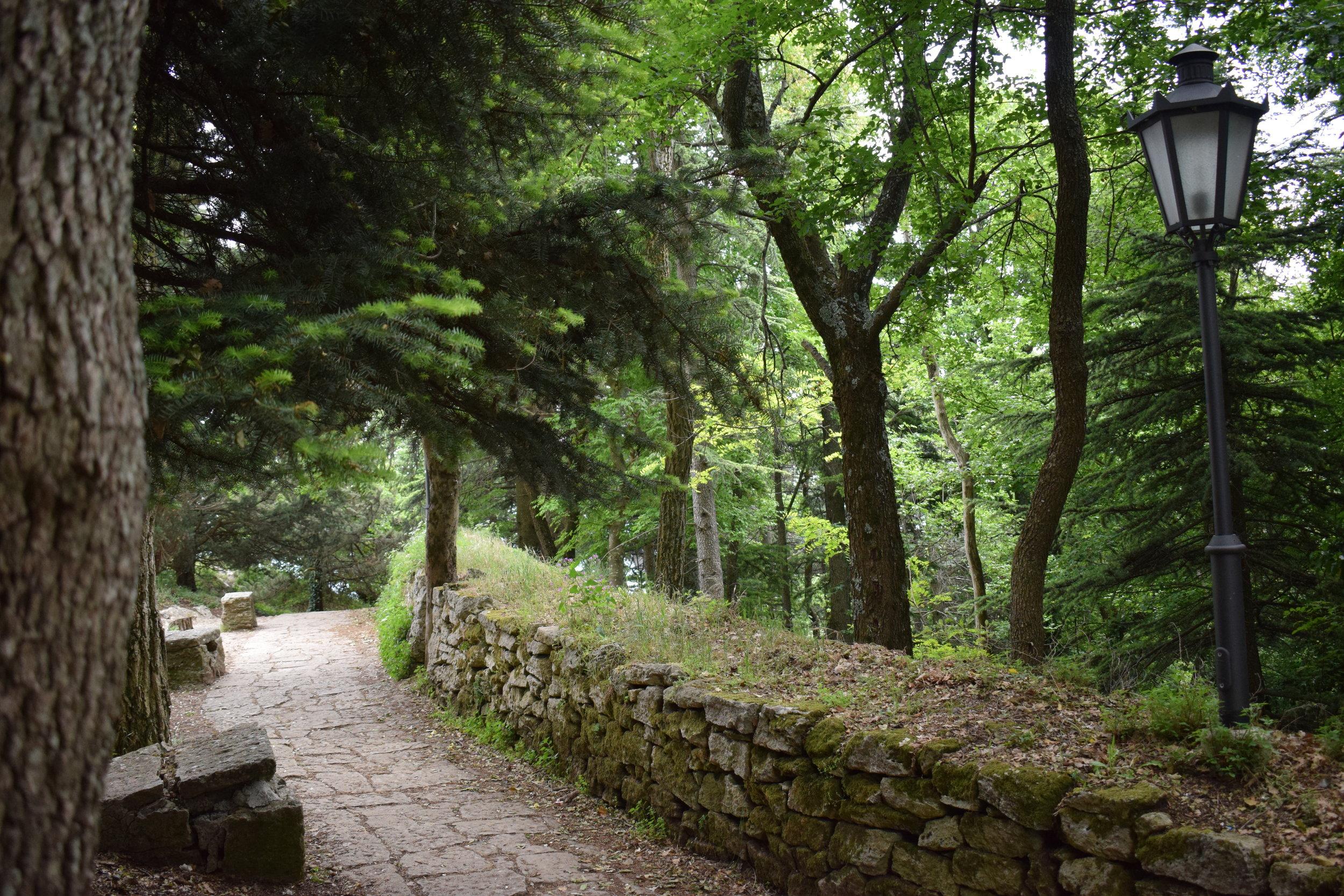 City-San-Marino-Forest