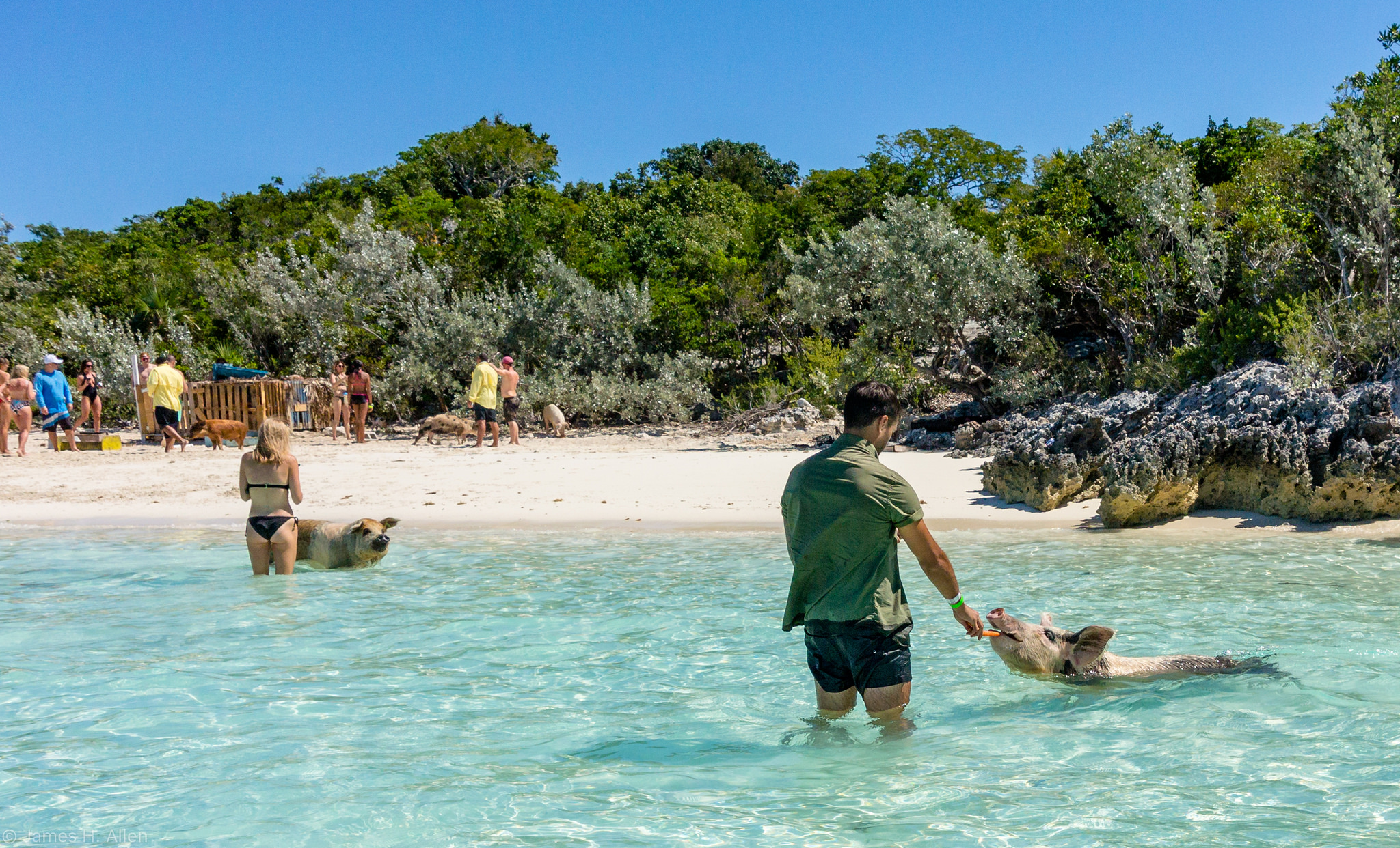 Pig Beach is famous for its swimming pigs. Image credit:    Jim Allen   /   Creative Commons