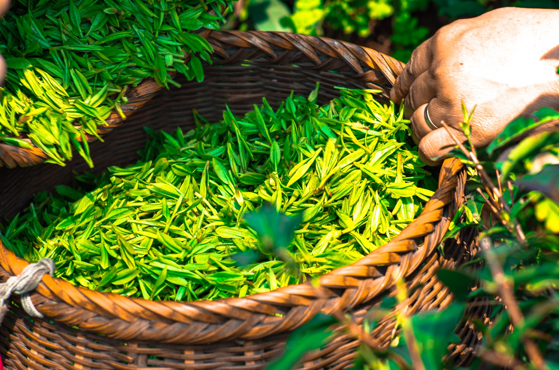 Would you trade coffee for all the tea in China?
