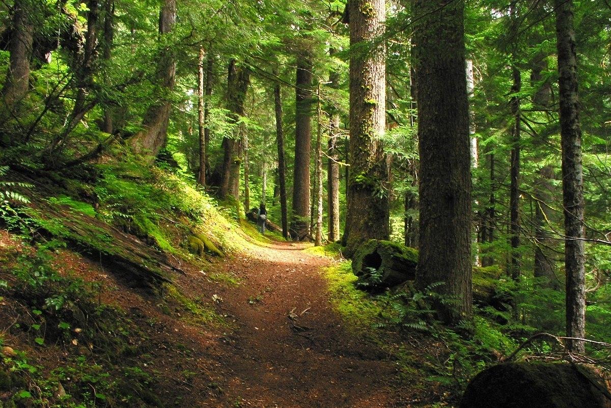 forest-path-i-1409635.jpg