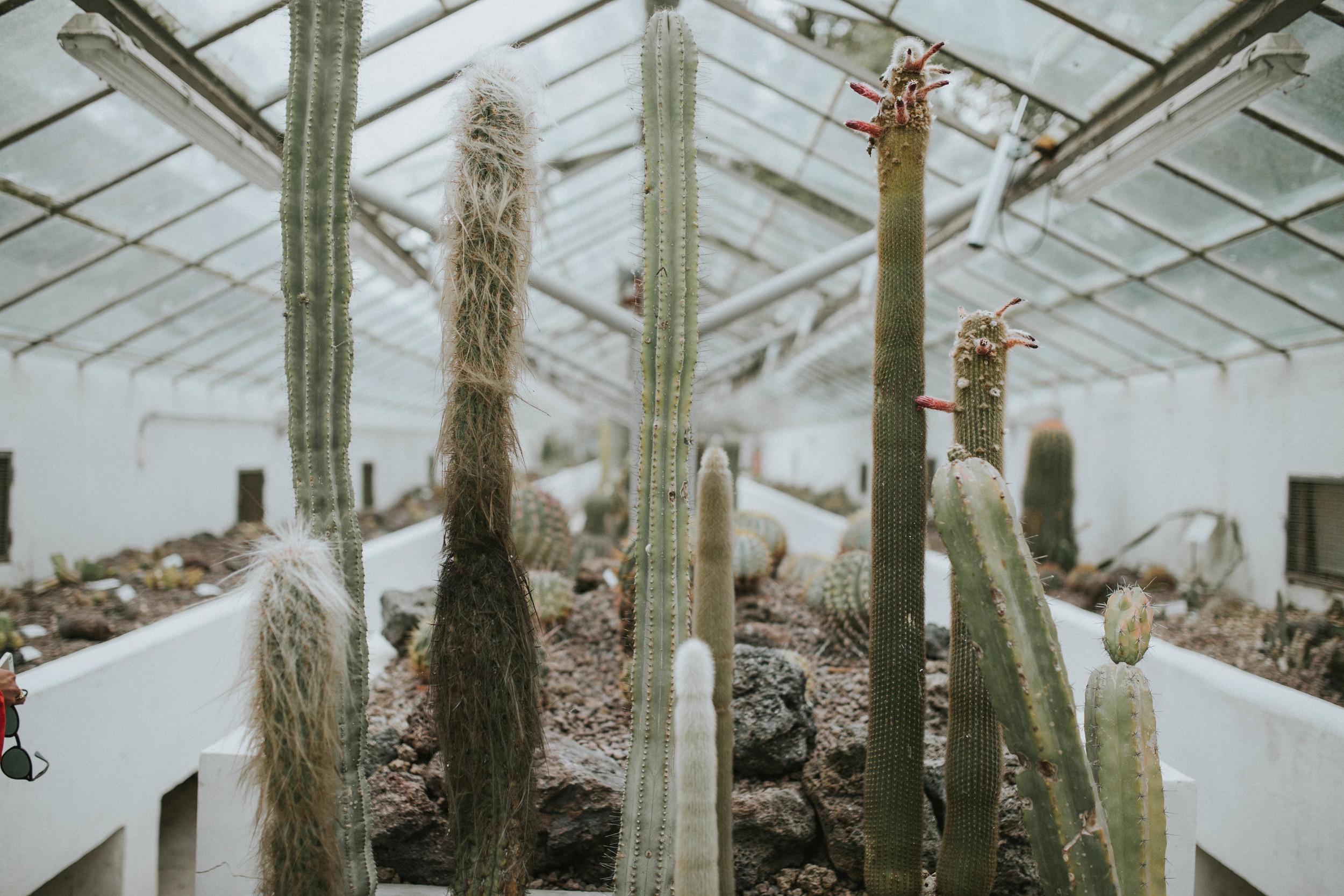 Botanical gardens Rome