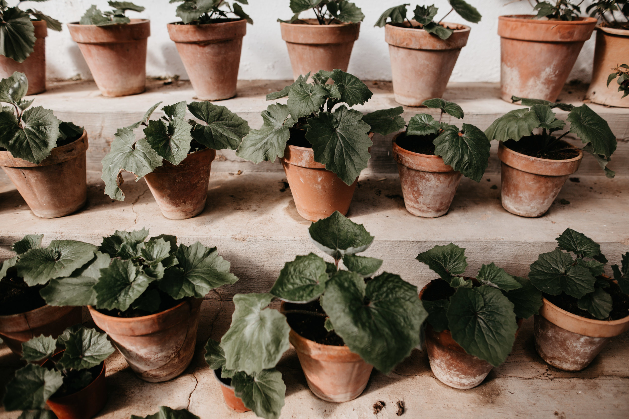 potted plants in greenhouse Spain