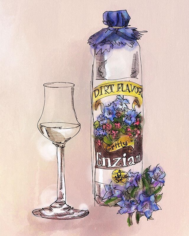 """Take heed agent, #gentian #schnapps will certainly have your palate at sixes and sevens. Looking at the label, you might think that you're in for an #alpine floral treat, this is not so. You may recall the #bitter #gentianliqueurs of France, but perhaps after too many coupes of Tattinger, you don't recall them at all. To refresh, rather than the flowers on the bottle or the subdued bitterness of #Suze, #Avèze or #Salers, this schnapps is dirt, distilled. Each sip has the flavor of a long day of getting slide tackled, a tuff of the pitch in your mouth after each fall.  Like many schnapps, this isn't a #geist, or as the French say, eau di vie, rather it's a neutral spirit distilled with the ancient monsterous root of one of the 400 types of gentian plants. These roots are dried before distillation, yet from the ground, they appear as alien to us as the antagonist of an H G Wells novel.  A shame he was never knighted. These roots will be distilled well above 40% alcohol by volume.  The result is the full expression of #gentiopicrin- one of the most bitter chemicals known. Some use it as medicine, but I find it helps with trapped wind.  For your purposes, this is the beverage of an outdoorsman, and mountaineer. Perhaps you have tried it before with your distant relations, who ware they, the #Oberhausers?  It is also an excellent accompaniment to the sweeter German style lagers in a """"molle mit korn,"""" or as the yanks say- a #boilermaker. Should you find yourself with too much time to kill on a stake out, this will serve as a hearty, grounding, companion."""