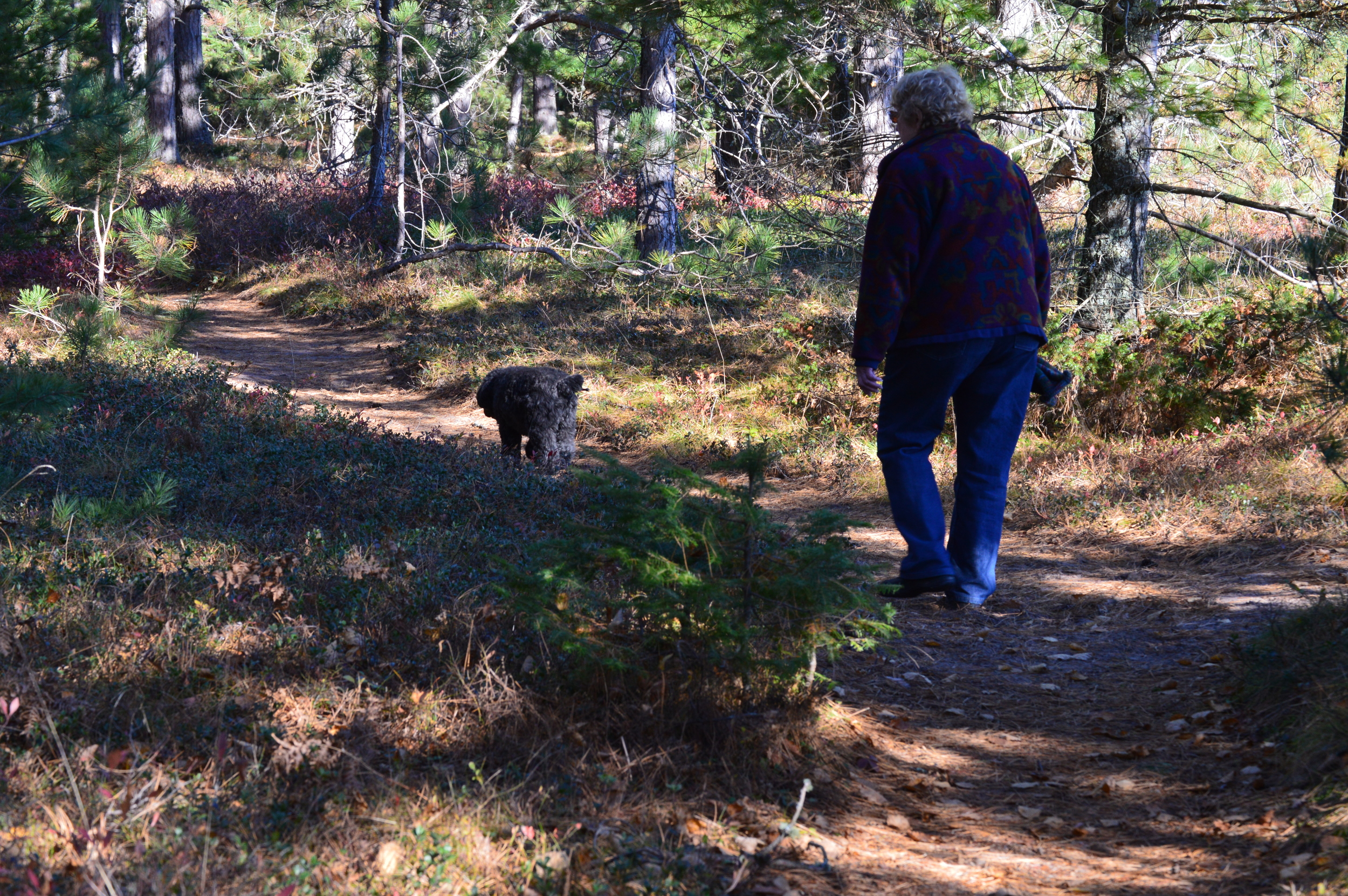 Walking the Trail Between State and Town Park Boardwalks
