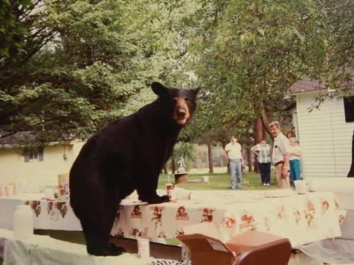 FAMILY PHOTO MAMA BEAR