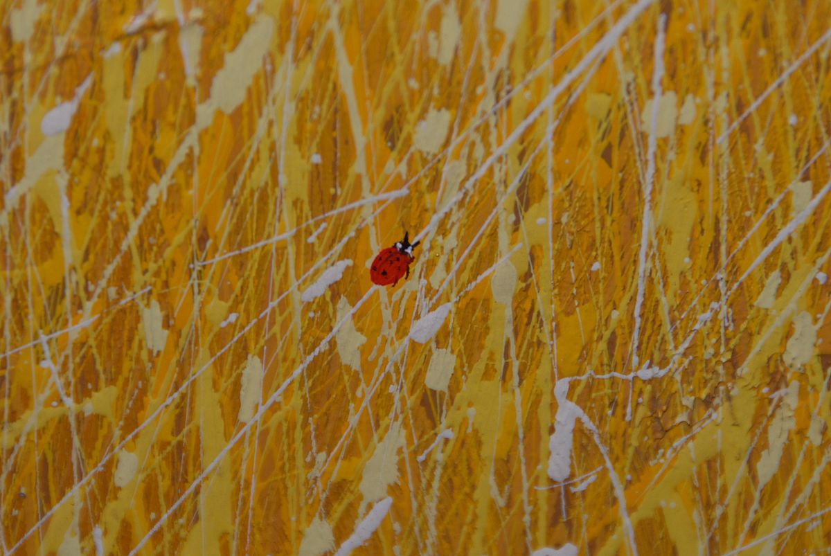 """Photograph of ladybug from Duane Albert Armstrong's """"Fields of Grass"""" series. {CC-by-SA-3.0}"""