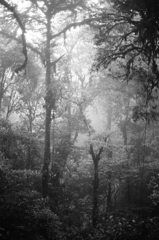 Monteverde, Costa Rica | October 2016