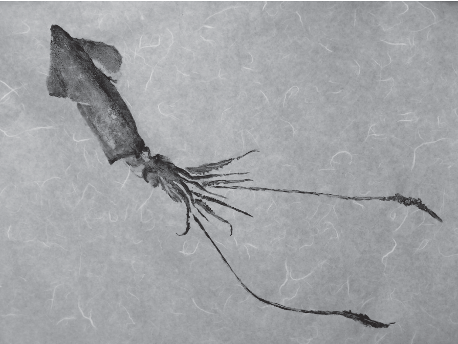 Squid I | ALYSSA IRIZARRY  Squid and block printing ink on paper, 18 x 24 in., 2016