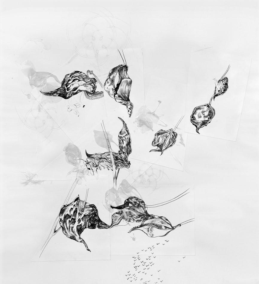 Wishing Life   MEGHAN RIGALI  Pen and ink, pencil, gel medium, acrylic, and silk of the milkweed pod, 3 x 4 ft., 2005