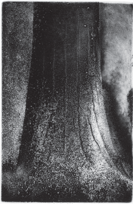 Tree Trunk IV (Douglas Fir)  Etching, 9 x 6 in., 2015