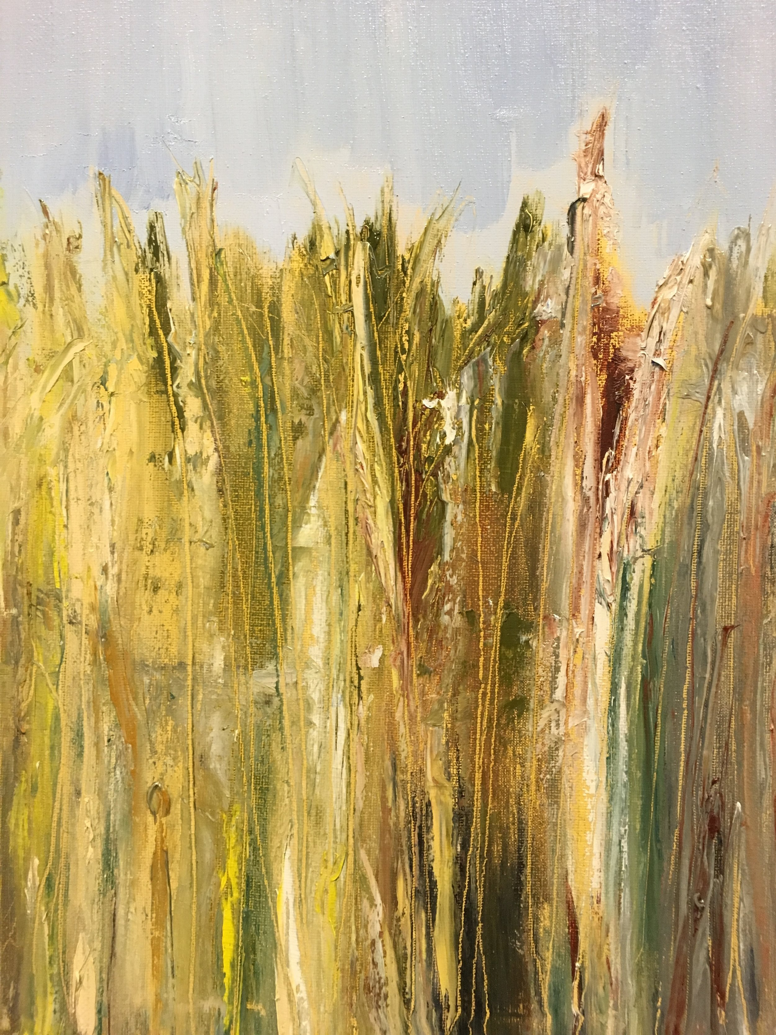 Sequim Wild Grasses  Oil on canvas, 14 x 11 in.
