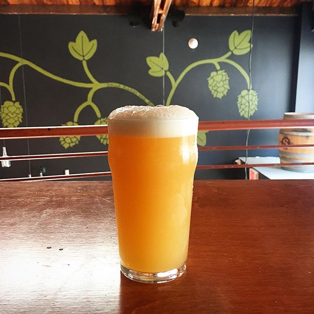 Suave Citra 5.5% abv is our newest, smooth talking, hazy pale ale. Brewed with English barley and hefty amounts of flaked wheat. She's got a rich, full flavored and fluffy mouth feel. Dry hopped exclusively with Citra, while the boil is all Mandarina Bavaria and Chinook. This beauty sends your tastebuds straight to citrus town! Tart tangerine, zesty orange, with softer notes of vanilla and juicy fruit gum. Grab a 20oz pour and a broom and watch the blazers get swept outta the playoffs. $6 pours at 5pm, games tips off at 6pm! 🧹 🍊 🍻 🏀