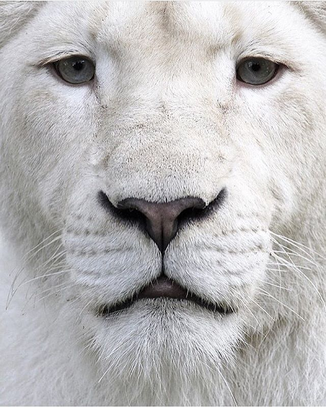 "Do Not Disturb: Winning Featuring accounts that find the chill spots, the places where all signs read ""do not disturb."" Who's in your chill spot? Tag a friend to #makechill. . . . #morechill #beenchill #artofchill #prochillas #bigcats #bigcatsofinstagram #kingofthejungle #wildlife #wildsights #keepitwild #whiteonwhite #minimal #minimalmood #mindtheminimal #minimalmovement #minimalexperience #unlimitedminimal #theartofslowliving #cannabisdesign #cannabiscommunity #cannabisculture #chillspots #chill #vibes #highlife #stonernation #onlysmokethefinest #productivestoner #streetdreamsmag"