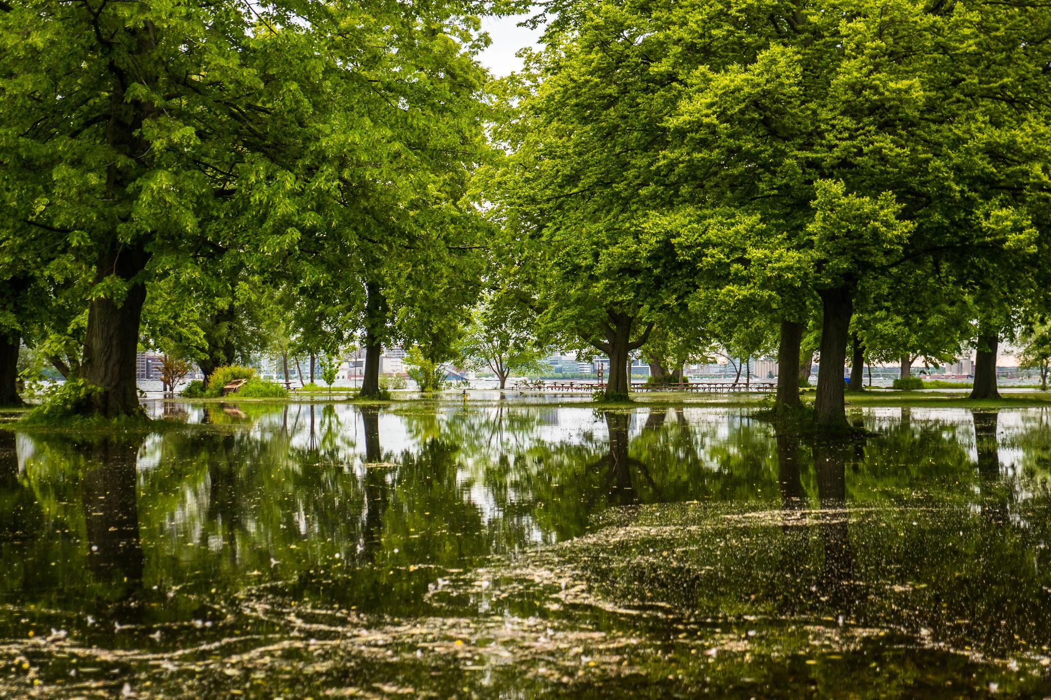 Sam_J_Island_Flood-6520829.jpg