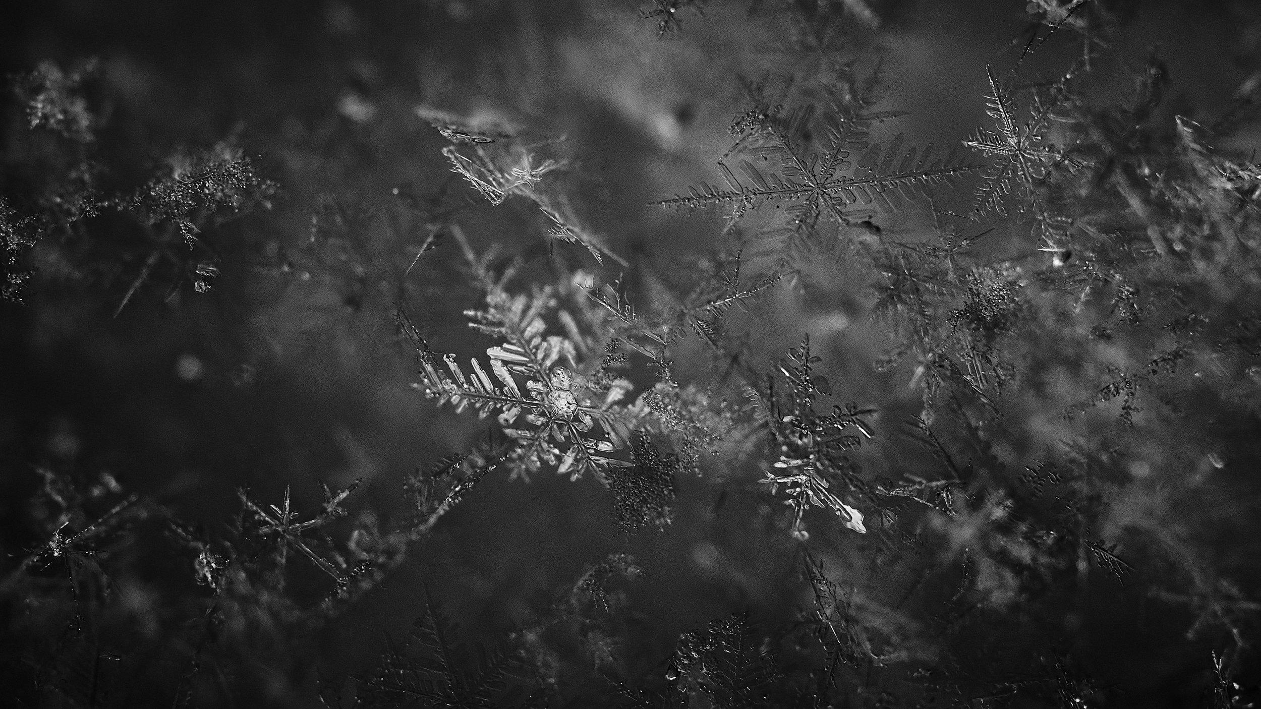 snow-macro_feb2019_01.jpg